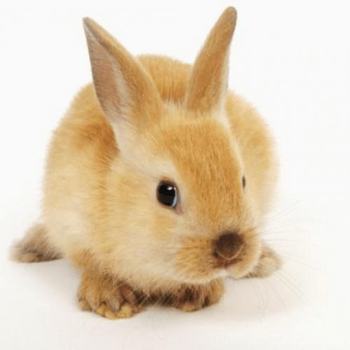 le plus délicieux des petits lapins bébé mignon coquin bêtises petit dernier blog maman blog famille recomposée blog les petits ruisseaux font les grandes rivieres blog PRGR https://prgr.fr