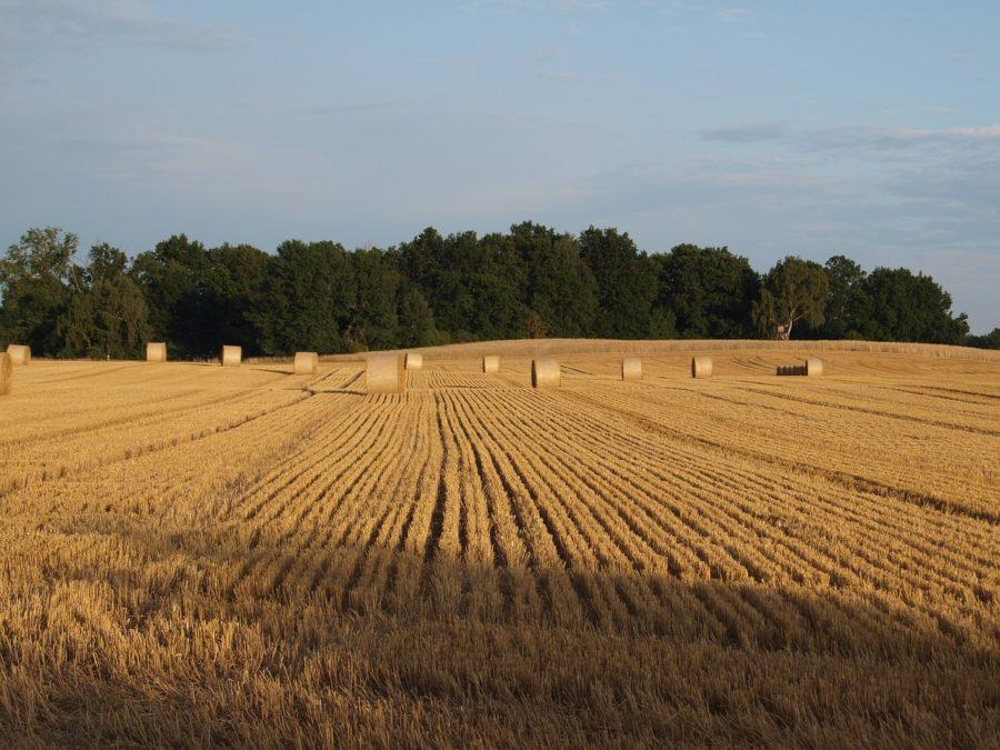 ROULEAU foin blé champ moisson été