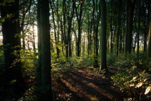 forêt trésor caché